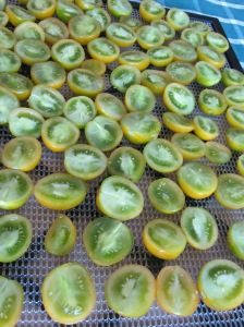 Tomatoes ready for dehydrator